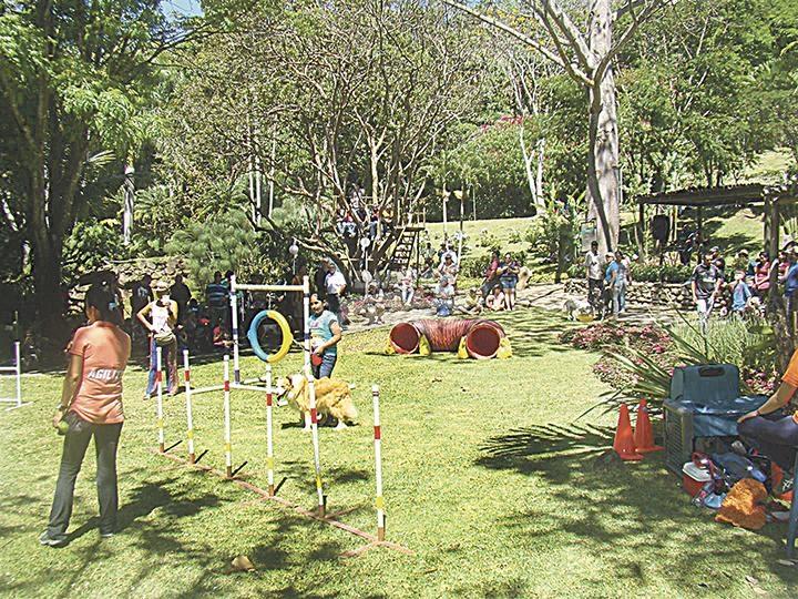 Diario extra domingo entre perros y flores for Actividad de perros en el jardin botanico de caguas