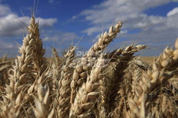 EEUU recortó, otra vez, la producción de soja argentina
